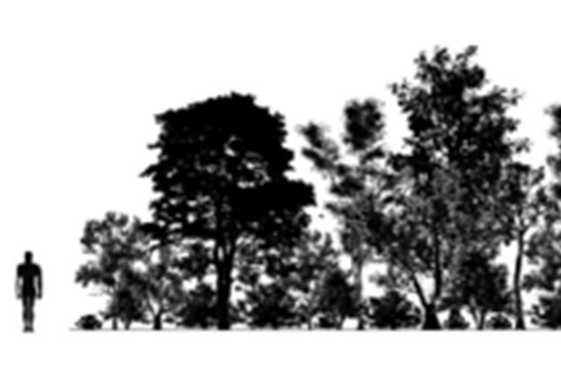 Shrubs with Trees